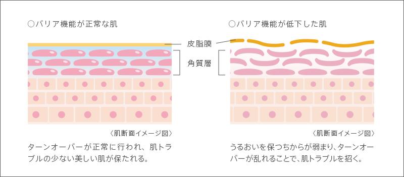 [バリア機能が正常な肌]〈肌断面イメージ図〉ターンオーバーが正常に行われ、肌トラブルの少ない美しい肌が保たれる。[バリア機能が低下した肌]〈肌断面イメージ図〉うるおいを保つちからが弱まり、ターンオーバーが乱れることで、肌トラブルを招く。
